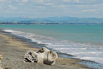 Te Awanga Beach looking north to Napier
