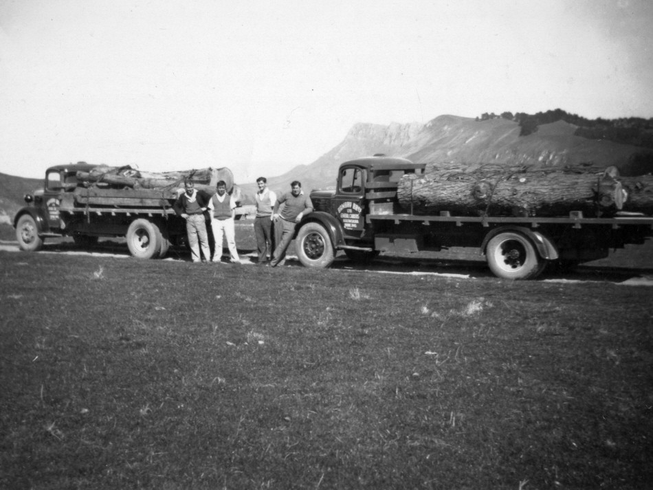 Donated Pine Logs from Clifton Station