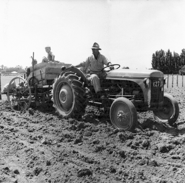 Ivan Bradshaw, Fred's brother, trying out the new tractor, a diesel-powered Ferguson during potato-growing era, 1950-1960s