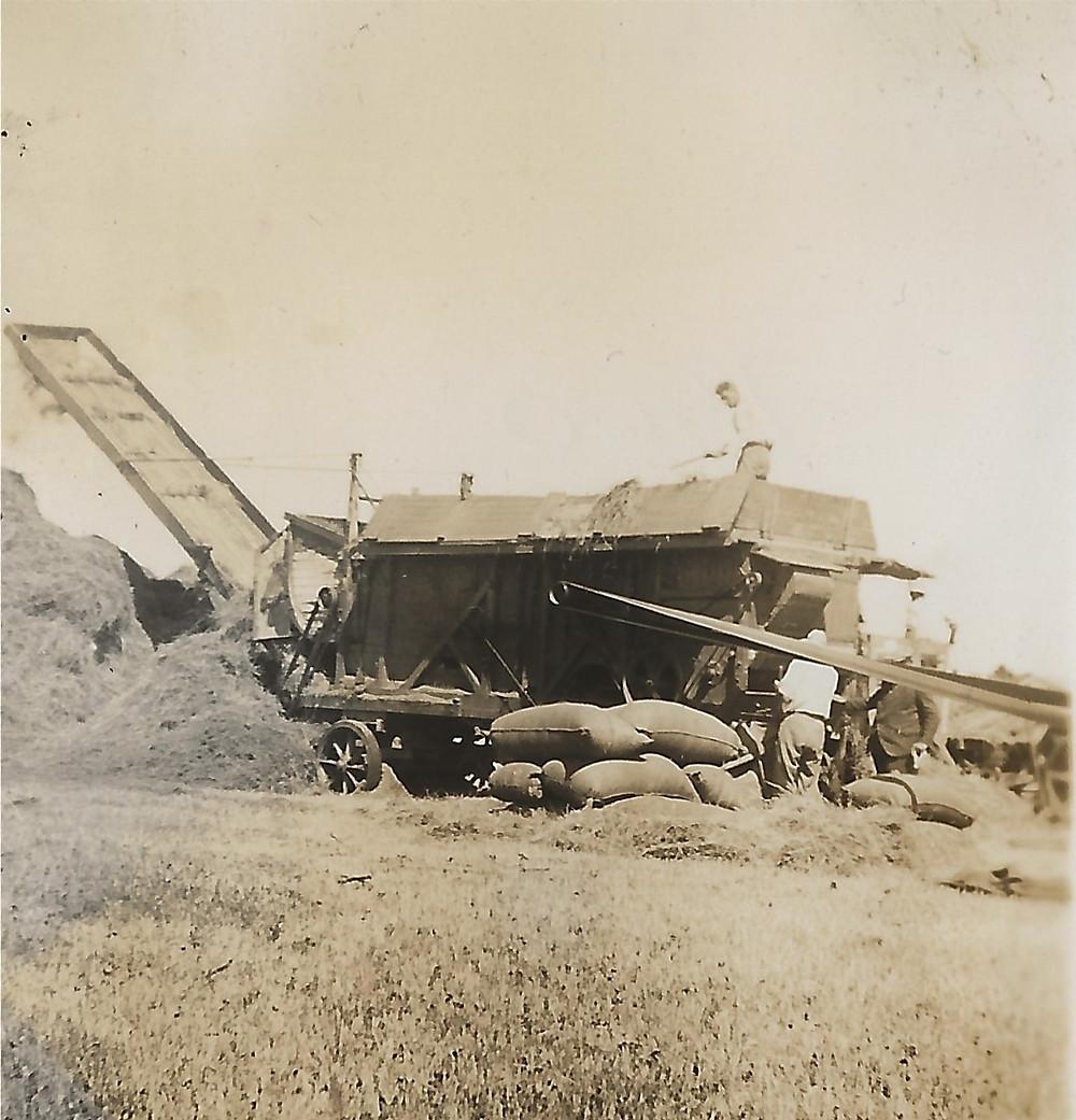 Haddington Station, Te Awanga, seed harvest in 1940 - combine harvester & seed sacks