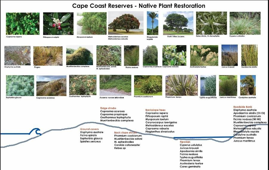 Cape Coast Reserves - Native Plant Restoration