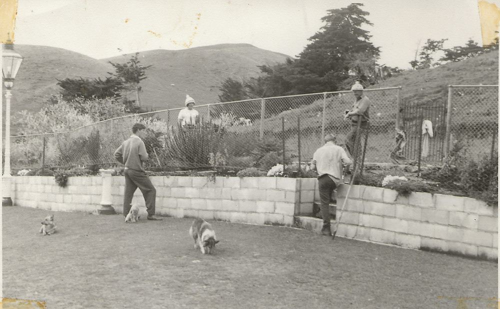 Building the wall: Malcolm and Jude Coop with Will and Kip about 1972 with Shetland sheep dog Jean in the foreground