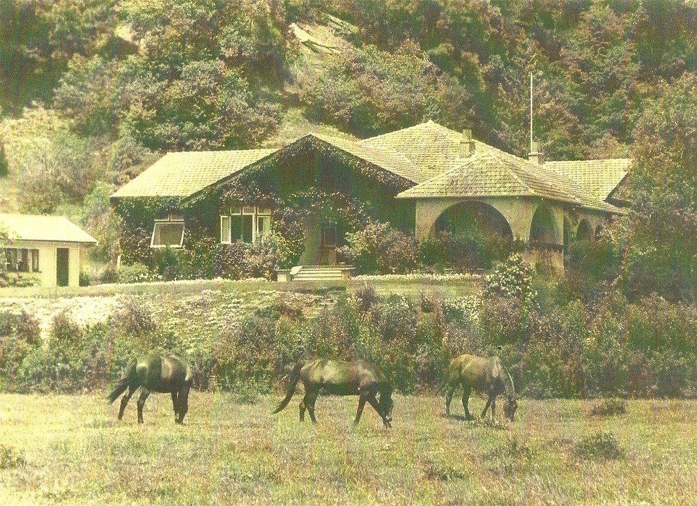 Horses in front of the Tiromoana Homestead