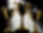 Screen Shot 2020-04-15 at 11.58.31.png