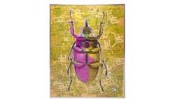 Dominic Vonbern Pop,n bug
