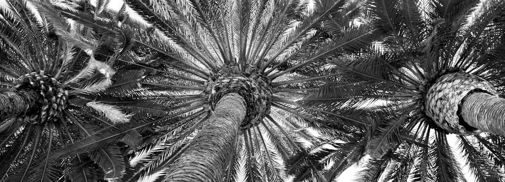 TREES_UZ6Q0186bw.jpg