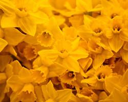 FLOWERS_3C2D6580.jpg