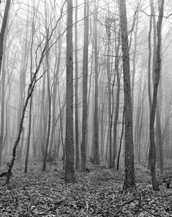 TREES_german forest.jpg