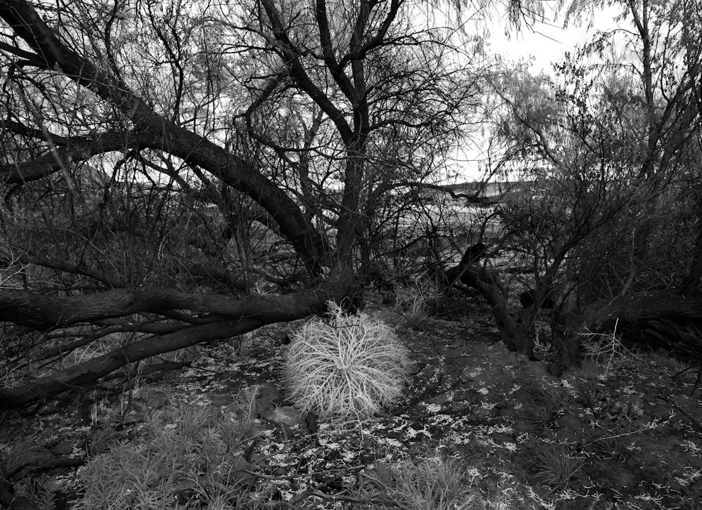 TREES_ZQ1A0519bw.jpg