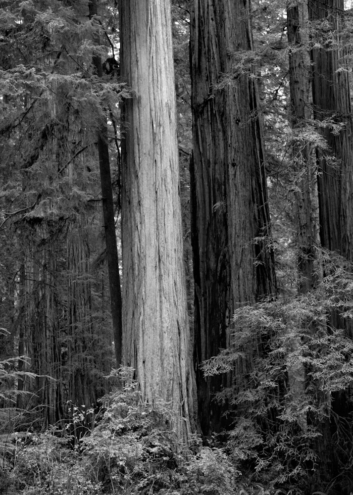 TREES_ZQ1A5808bw.jpg