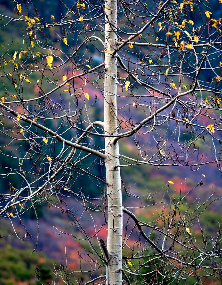 TREES_ZQ1A6798.jpg