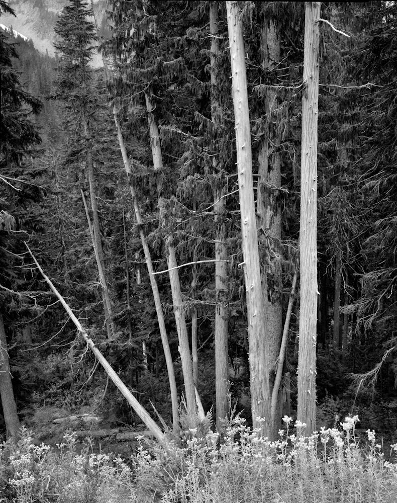 TREES_forest.jpg