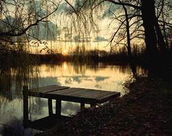 TREES_1138_Carulli toxic dock.jpg