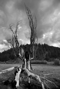 TREES_3C2D7096bw.jpg