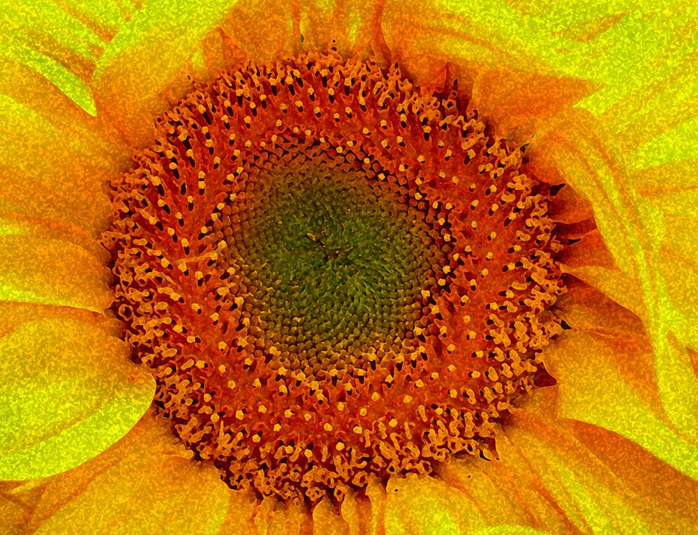 WATERCOLOR_Sunflower.jpg