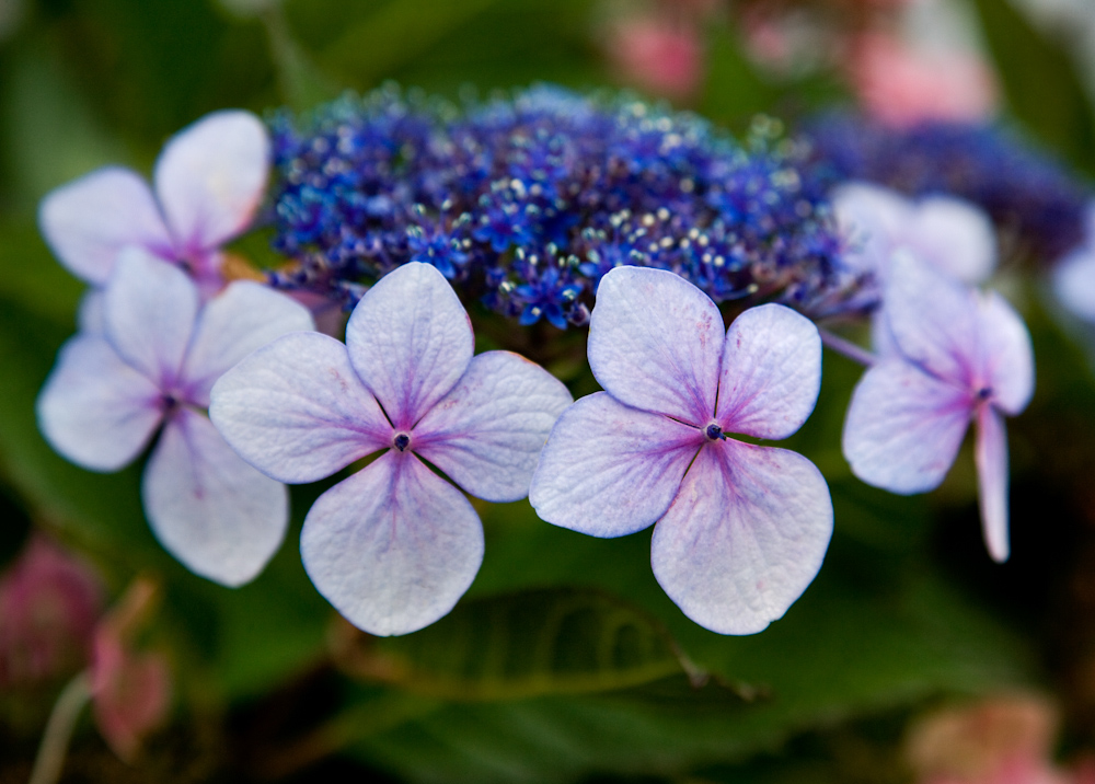 FLOWERS_ZQ1A8422.jpg