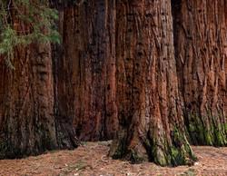 TREES_ZE4U0068a.jpg