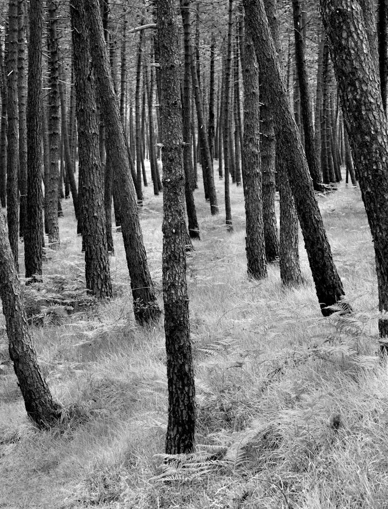 TREES_ZQ1A0729.jpg