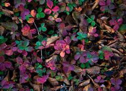 FLOWERS_ZQ1A6782.jpg