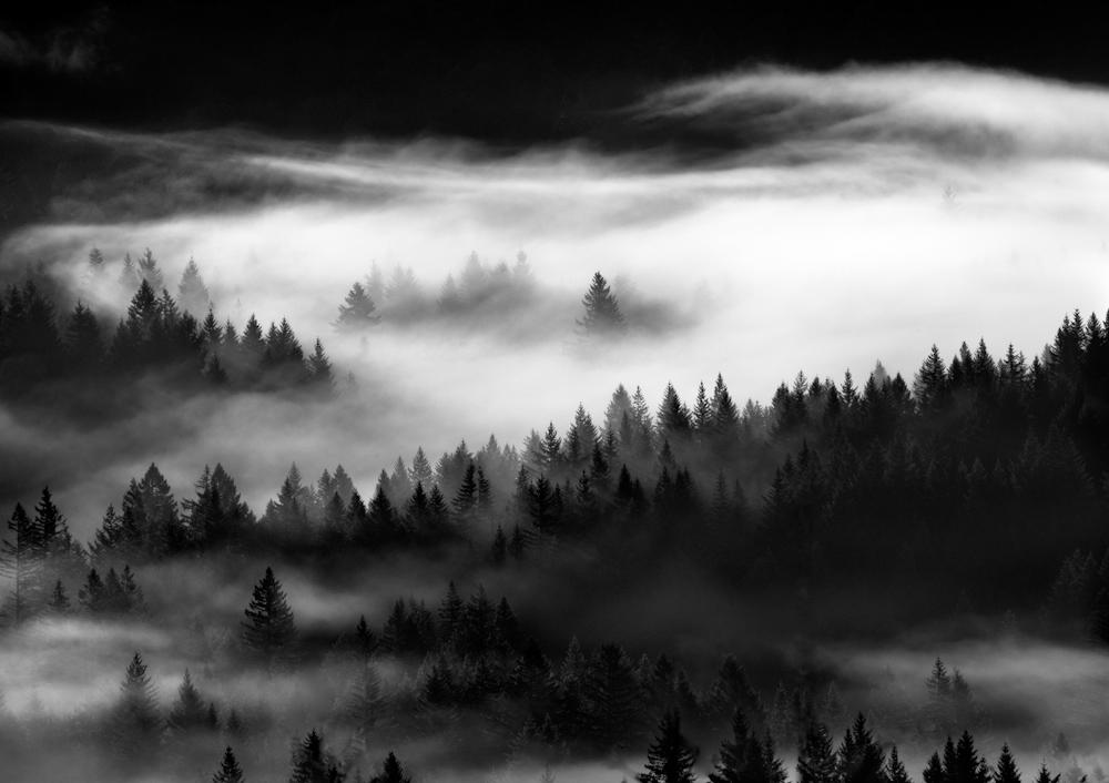 TREES_3C2D1382-Editbw3.jpg