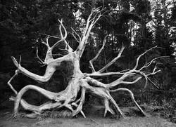 TREES_ZQ1A5689bw.jpg