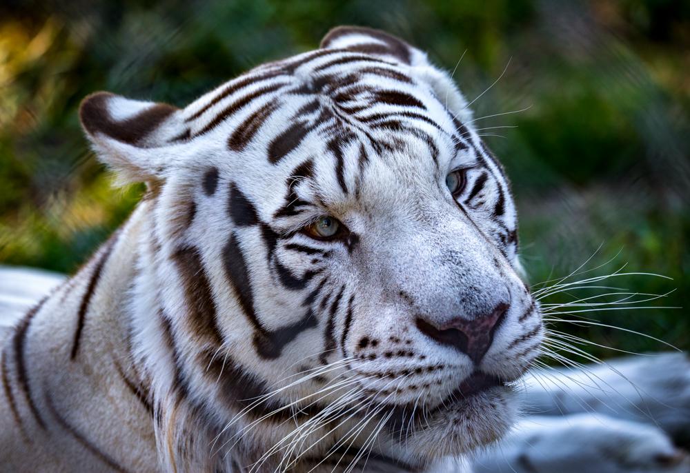 Animal_I7P5287
