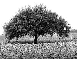 TREES_Resize Wizard-1flower.jpg