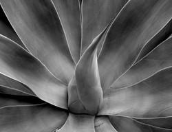 MISC_newport succulent 11 x14.jpg