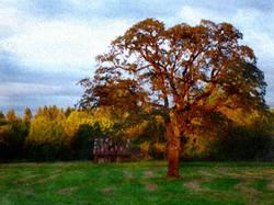 WATERCOLOR_Sunset Oak 11x14.jpg