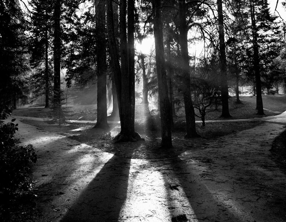 TREES_ZQ1A8228bw.jpg