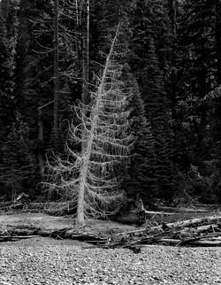 TREES_illuminated 11x14.jpg