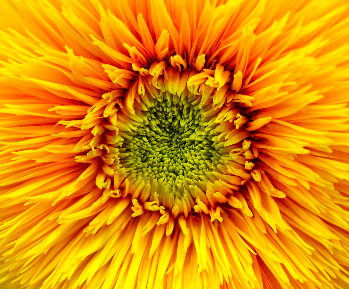 FLOWERS_DSC02228.jpg
