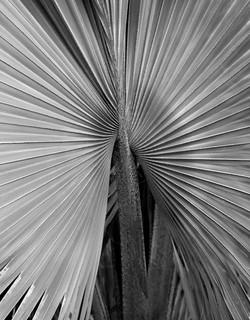 TREES_3C2D6332bw2-Edit.jpg