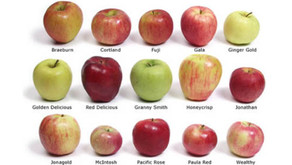 September is National Apple Month!!!