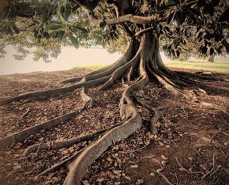 Mentale coach voor bedrijven Roots to Bridges