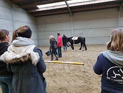 teambuilding met paarden