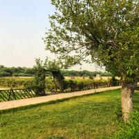 Fields and Garden