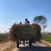 Donkey Cart in Village