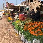 Orange stall in regional Punjab.
