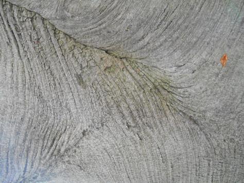 Reconnaître les arbres par les écorces