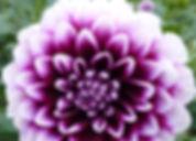 visite du parc floral