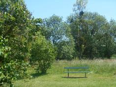 Visite guidée de l'arboretum du Breuil