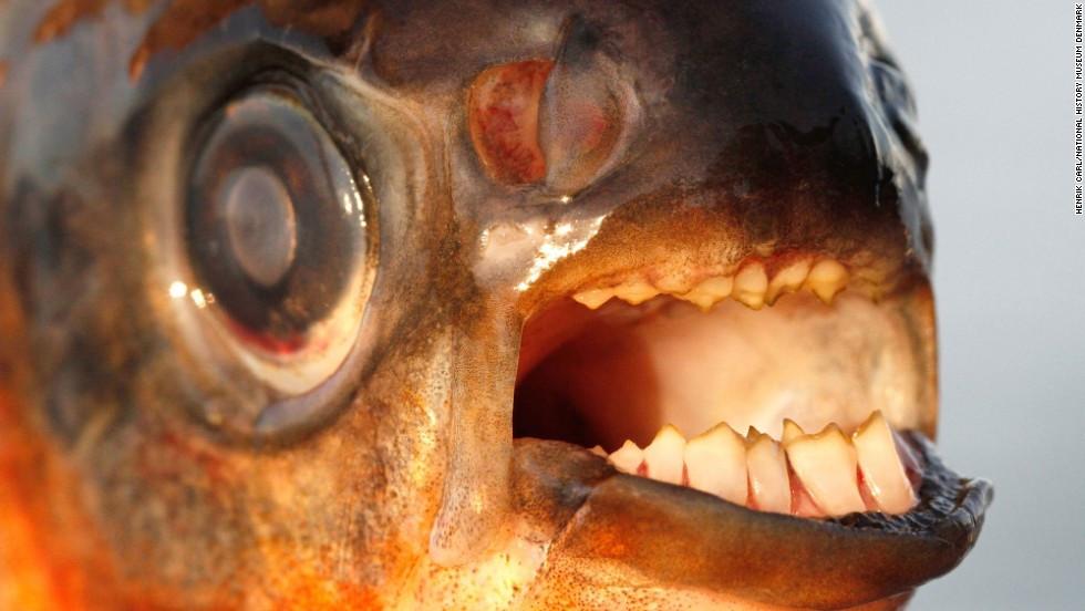 Ballbusting fish