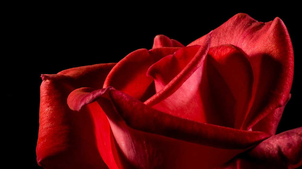 American beauty - colonna sonora - premi - Sam Mendes - monolog finale - senso della vita
