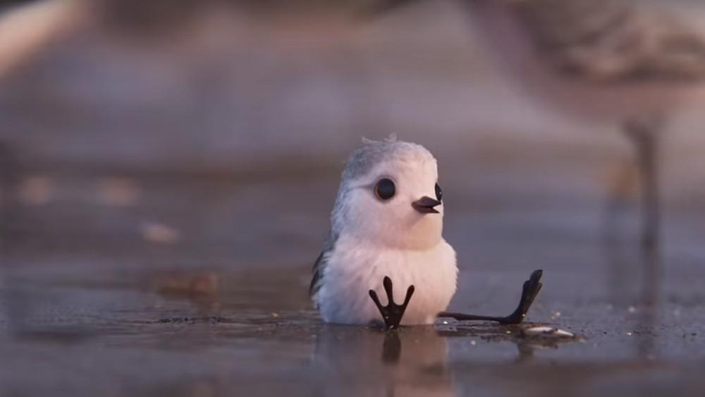 Piper - Pixar - Disney - corto animato - senso della vita - crescita - Il Tuo Biografo
