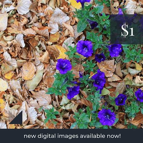 Digital Web Graphic   Purple Flowers on Yellow Leaves   Photography