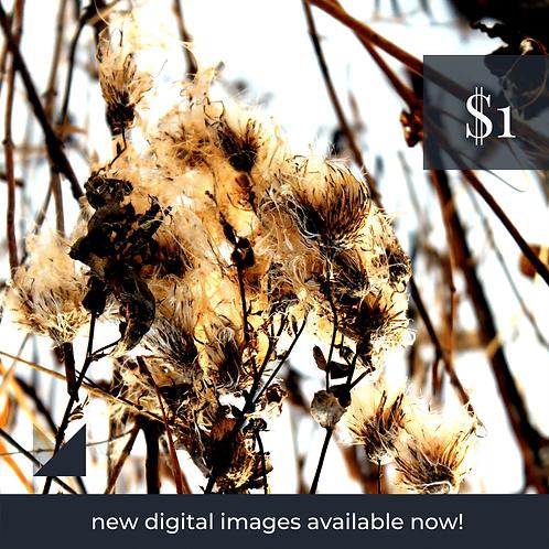 Digital Web Graphic   Winter Flora   Photography