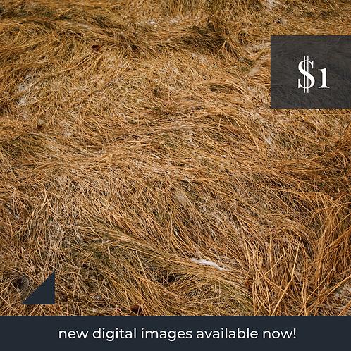 Digital Web Graphic | Autumn Grass (flattened) | Photography