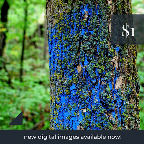 Digital Web Graphic | Painted Tree (Blue) | Photography
