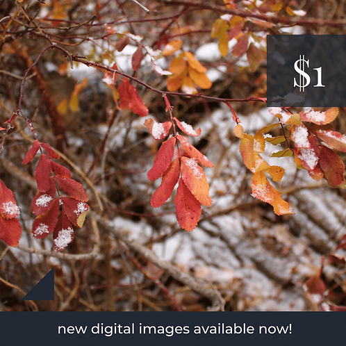 Digital Web Graphic | Autumn Leaves in Winter | Photography